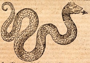 Basilisk, Gesner, Historiae Animalium